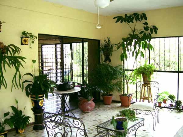 Piante da appartamento guida completa - Piante verdi interno ...
