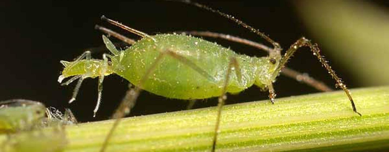 Parassiti delle piante: come combatterli