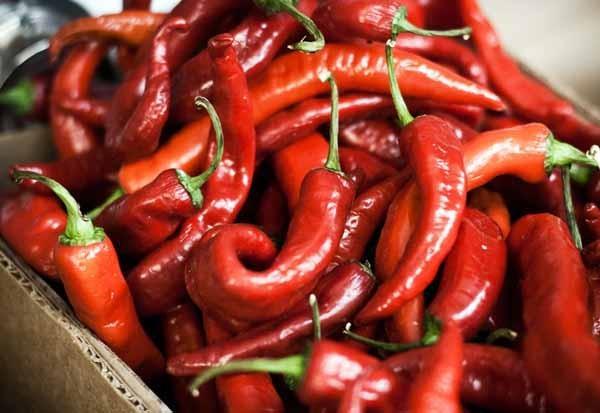 Coltivare peperoncino piccante in casa