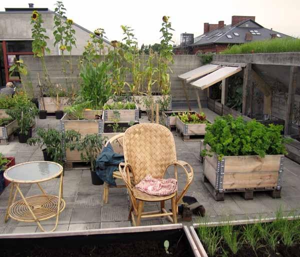 Orto sul balcone: guida completa