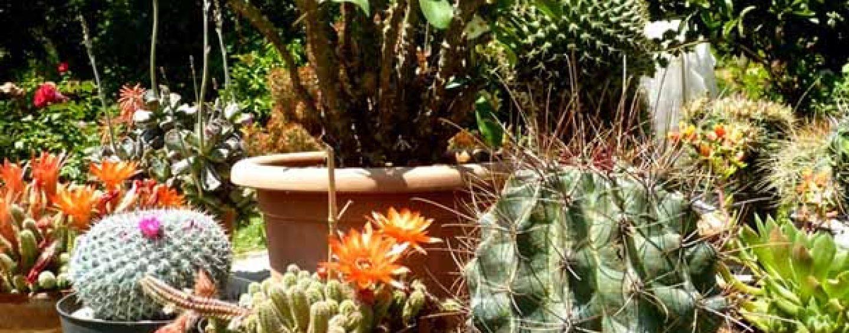 Piante grasse da esterno fritillaria cura dei fiori delle - Piante grasse da esterno ...