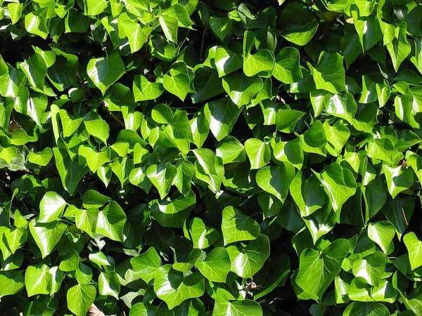 Piante archives coltivare facile for Alberi a crescita veloce