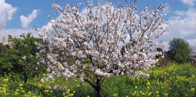 Coltivare facile lavori di stagione archives coltivare for Potatura del melo
