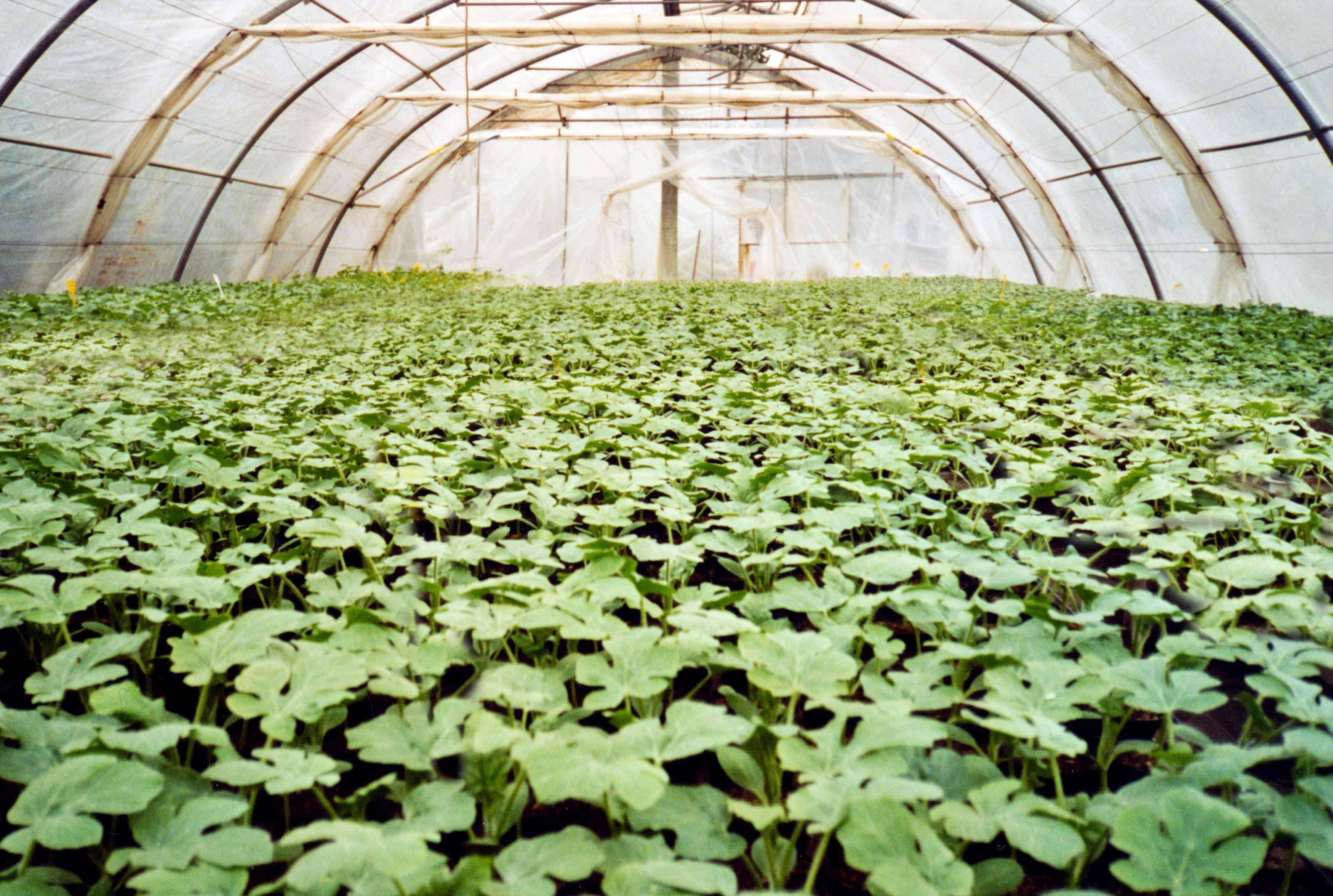 Tunnel serra guida completa per costruirlo in casa for Coltivare meloni