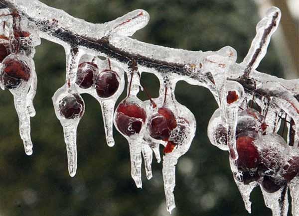 Come proteggere le piante dal freddo for Piante da frutto che resistono al freddo