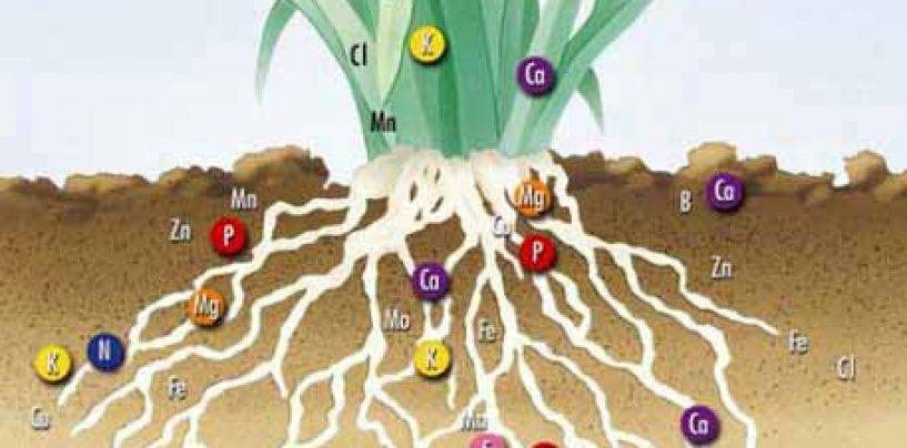 Concimazione ed elementi nutritivi nelle piante