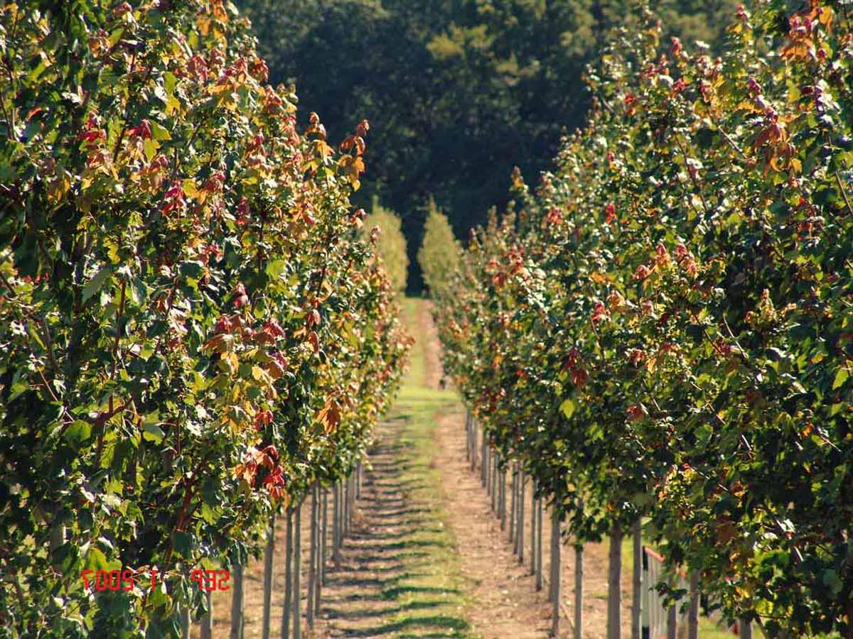 Concimare le piante da frutto - Alberi frutto giardino ...