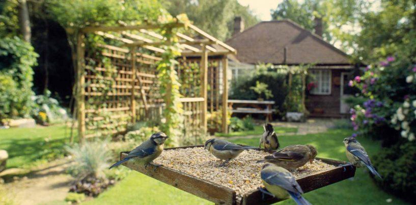 Birdgardening: come attirare uccelli in giardino