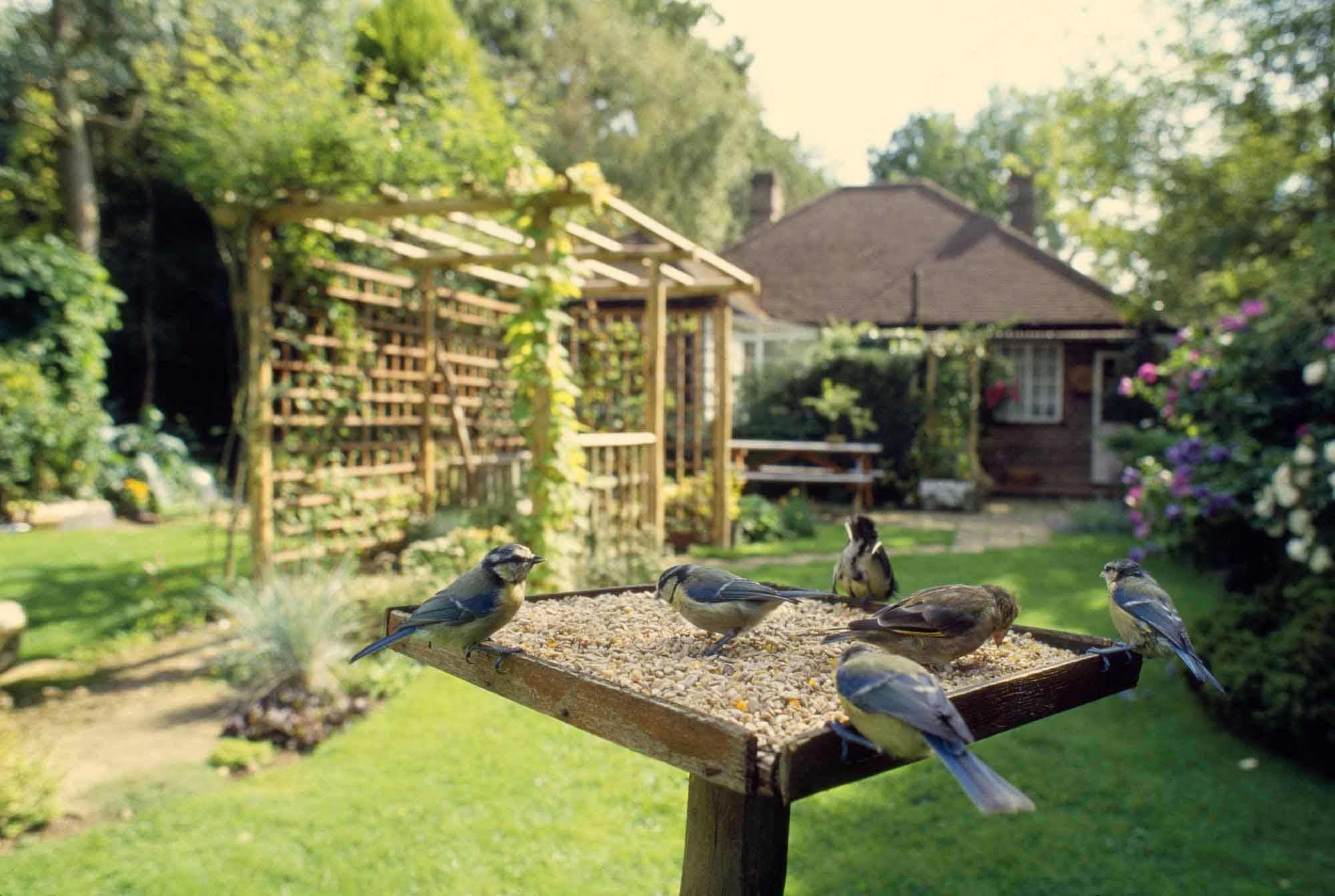 Birdgardening guida a come attirare uccelli in giardino - Giardino del te ...