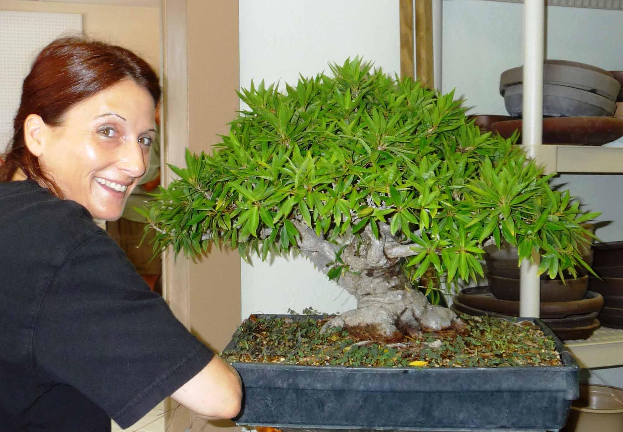 Cura del bonsai guida completa for Bonsai pianta