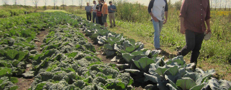 orti condivisi coltivare facile