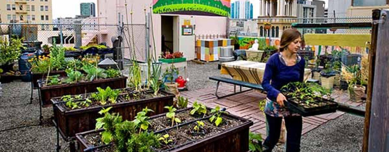 Orto da balcone o terrazzo coltivare facile for Orto sul terrazzo contenitori