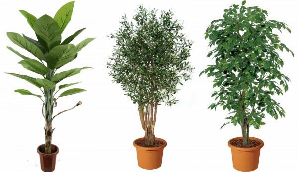 Piante artificiali guida a come usarle in giardino for Piante alte da esterno