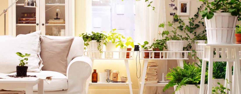 Piante da interno scelta coltivare facile - Piante grasse da interno poca luce ...