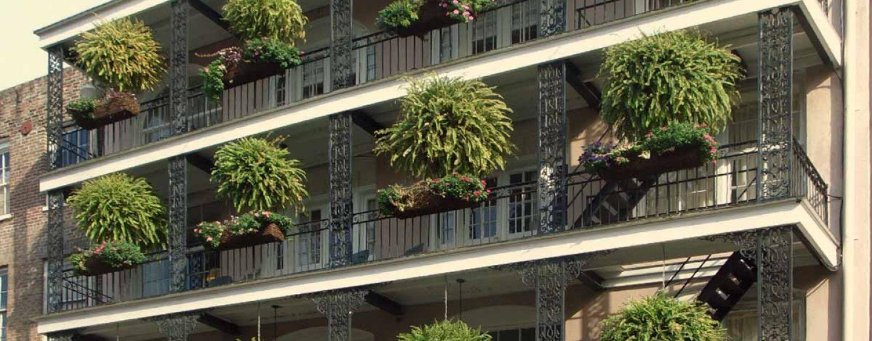 Piante da terrazzo coltivazione e cura coltivare facile for Piante da terrazzo soleggiato
