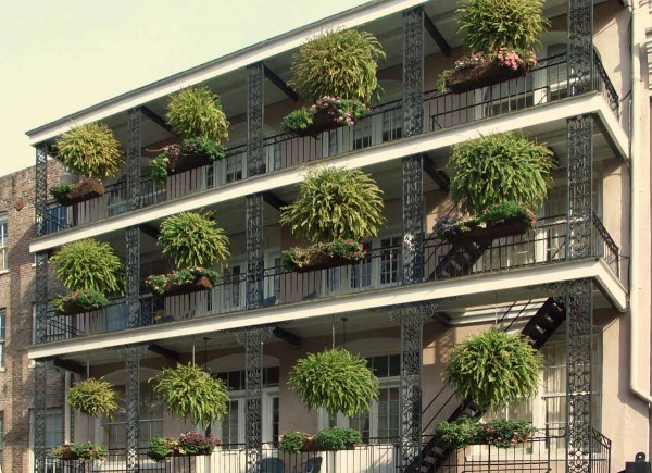 Piante da terrazzo guida completa alla coltivazione e cura for Piante da balcone perenni