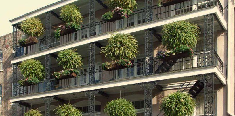 Piante da terrazzo: coltivazione e cura