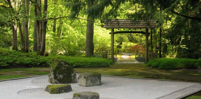 Piante per giardino zen