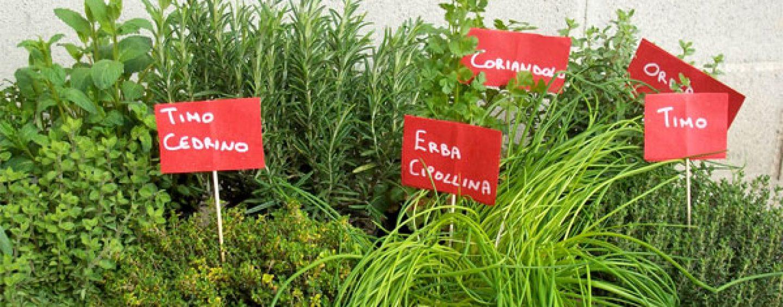 Coltivare in casa piante aromatiche