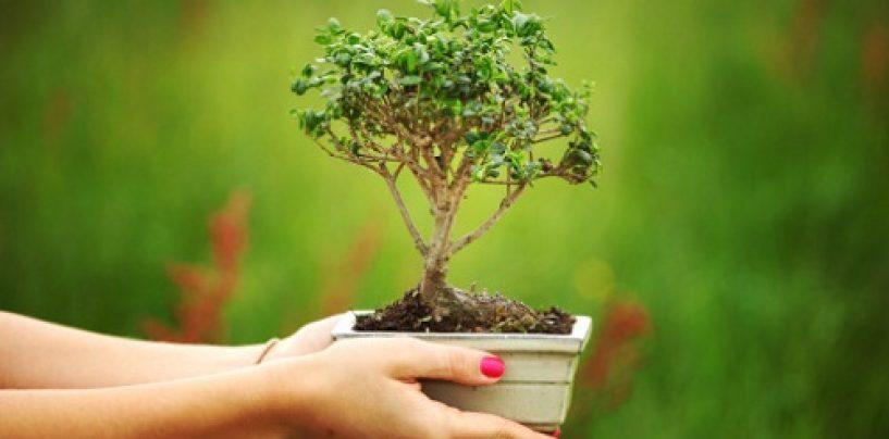 Curare il bonsai