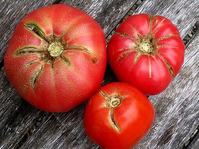 Malattie dei pomodori for Casa di cura facile arbusti di fronte