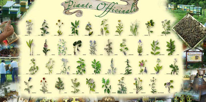 Coltivare in casa piante officinali