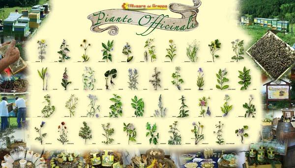 come coltivare in casa le piante officinali