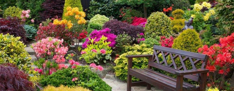 Devi sistemare il tuo giardino? Fatti aiutare da Yougenio