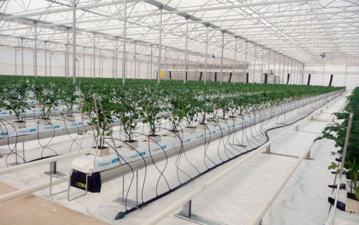 coltivazione piante in stufe e stanzoni