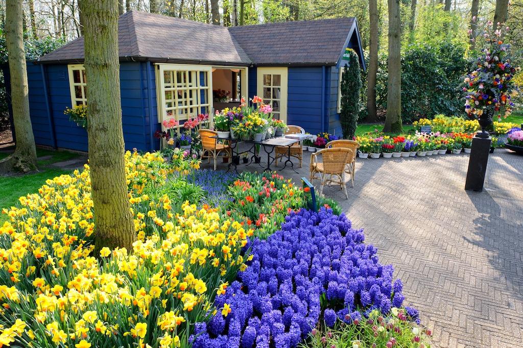 Un giardino fiorito tutto l 39 anno for Alberelli da giardino fioriti