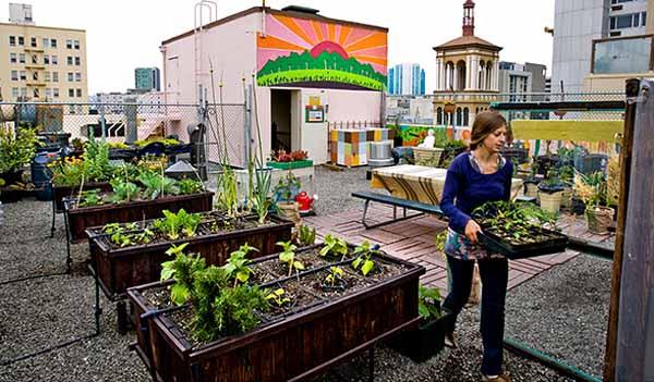 Fare l 39 orto da balcone o terrazzo - Terrazzo fai da te ...