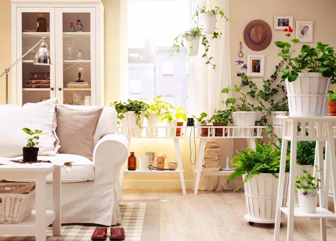 Piante Da Appartamento Di Facile Coltivazione.Piante Da Interno Guida Completa Alla Coltivazione E Cura