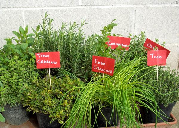 Coltivare in casa piante aromatiche - Piante aromatiche in casa ...