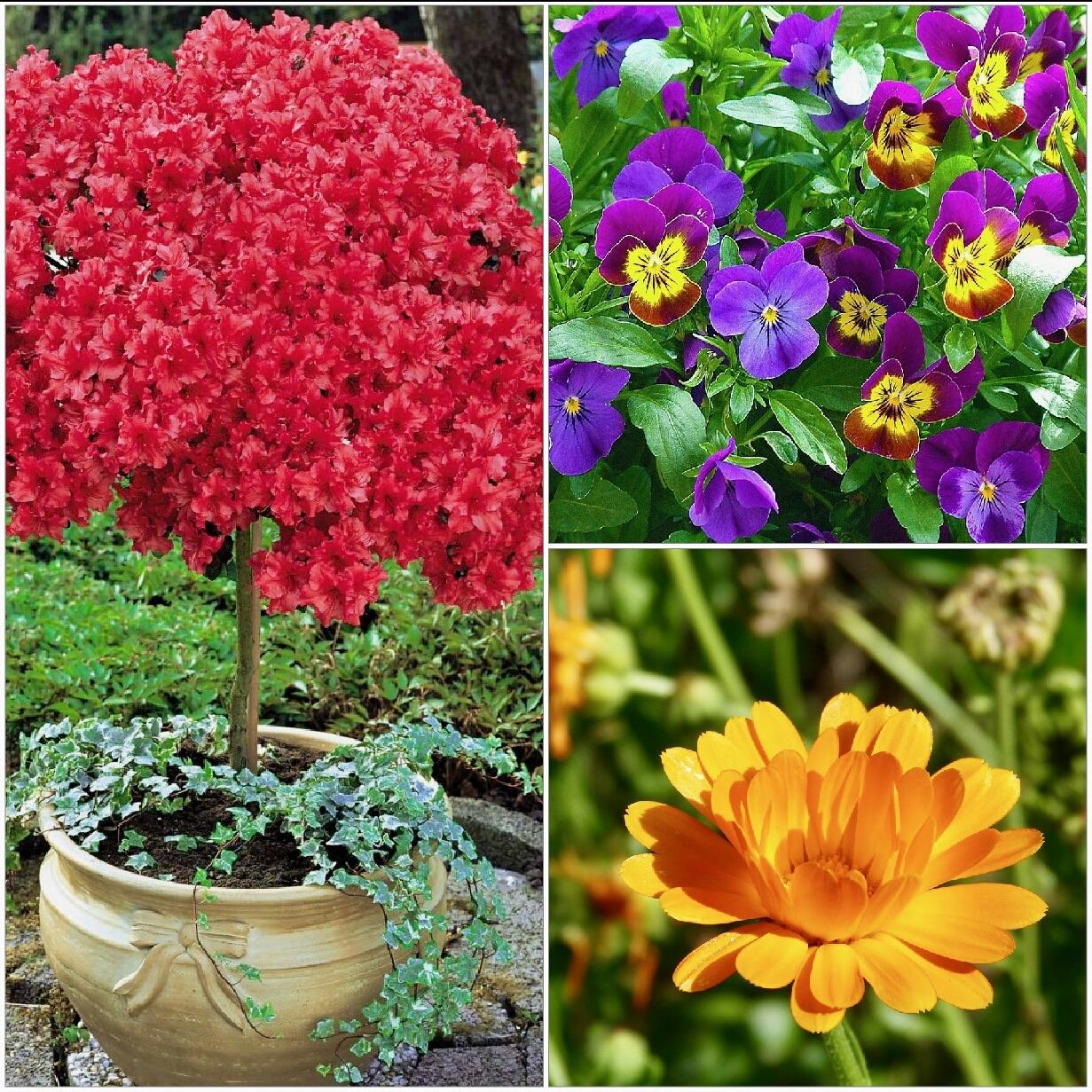 Fiori Da Balcone Ombra 6 fiori bellissimi da piantare in primavera