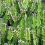 Come prendersi cura dei cactus