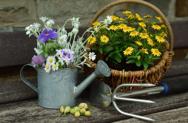 Quando innaffiare i fiori