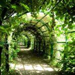 Le piante che amano l'ombra