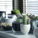 Le piante che purificano l'aria