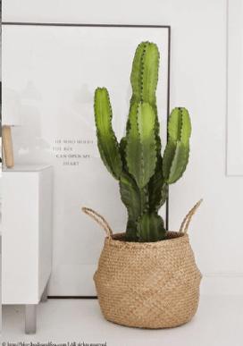 Composizione Piante Grasse In Vaso Di Vetro.Come Arredare Con Le Piante Grasse Trucchi E Suggerimenti