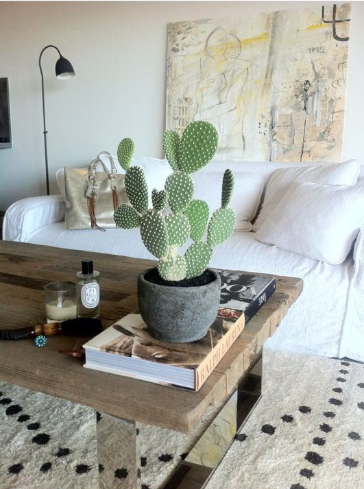 Cactus da arredo