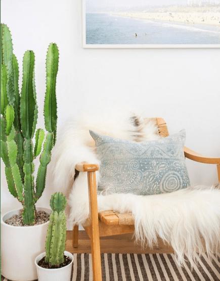 Cactus in salotto
