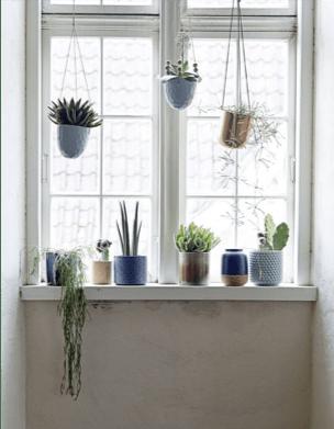Davanzale con piante grasse