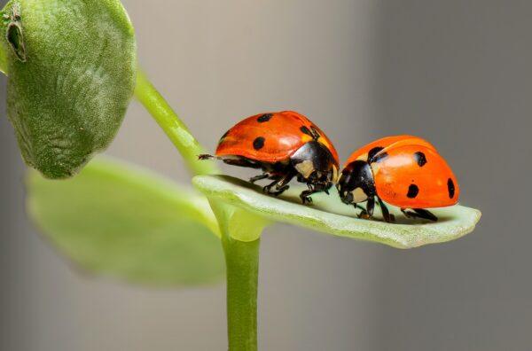 rimedi naturali contro i parassiti