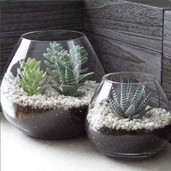 Le piante grasse in un'ampolla di vetro