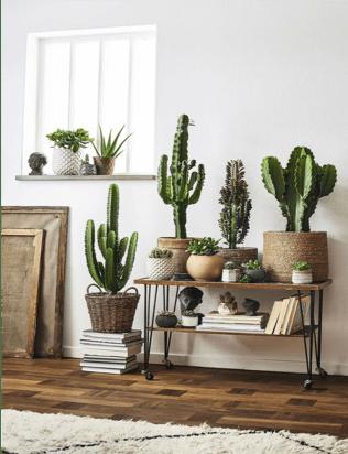 Le piante grasse per decorare l'arredo di casa