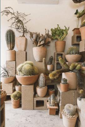 piante grasse in terrazzo