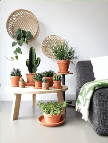 piante grasse in zona living