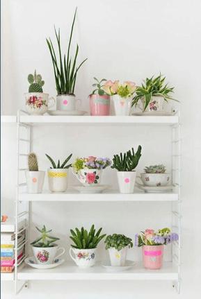 piante grasse in tazzine