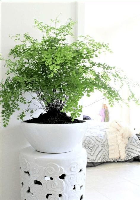 pianta in vaso da interno