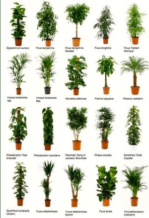 Come scegliere le piante da interni